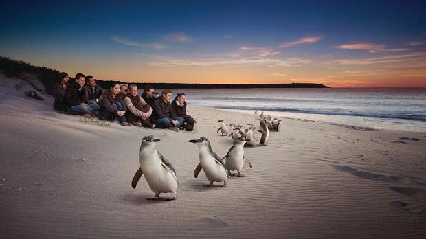 đảo Phillip Melbourne