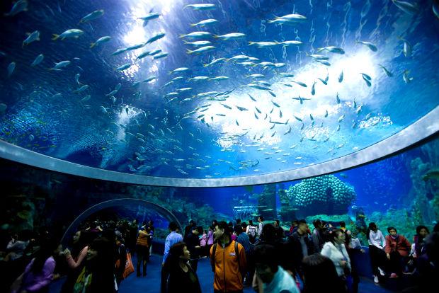 Bảo tàng viện Hải Dương Học