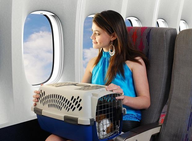 Có được mang thú cưng lên máy bay Vietnam Airlines không?