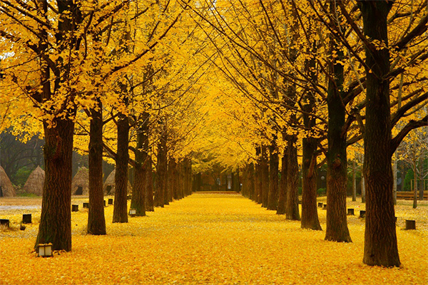 mùa thu hàn quốc vào tháng mấy